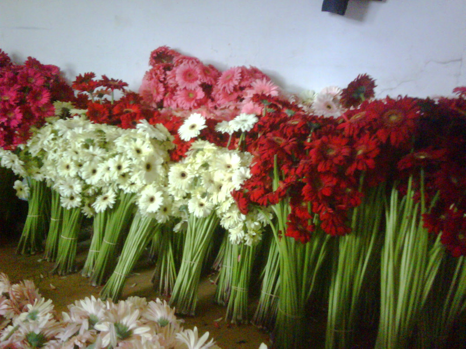 Selling Fresh Cut Flowers Bandung