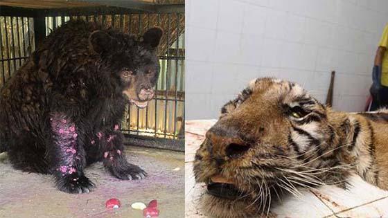 Inilah Zoo Neraka Paling Kejam Yang Terletak Di Indonesia