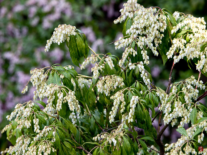 From The Garden Of Zen March 2011