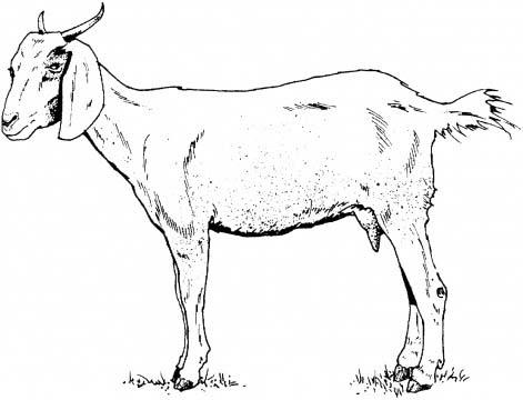 SDSU Children's Literature: Tanzania: Goats (and Books ...
