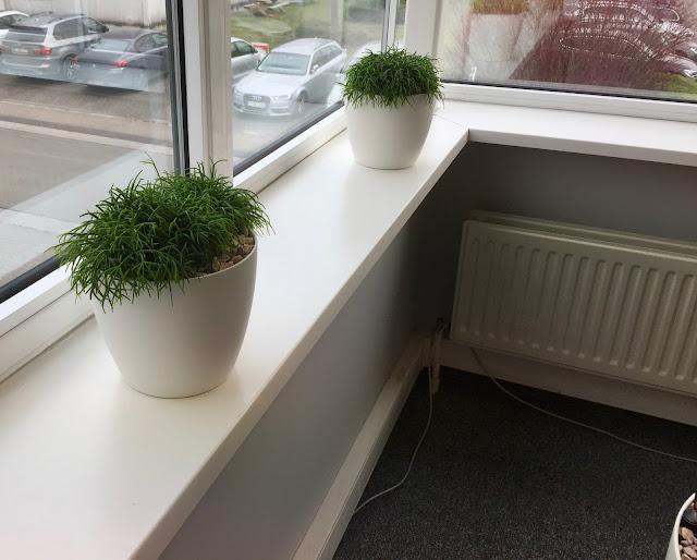 kantoorbeplanting Antwerpen Brussel Hasselt Antwerpen Limburg