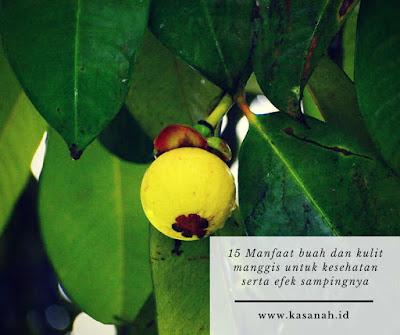 manfaat buah manggis untuk kecantikan