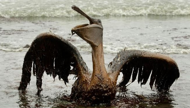 Golfo Messico, marea nera di petrolio della Taylor Energy non si arresta.