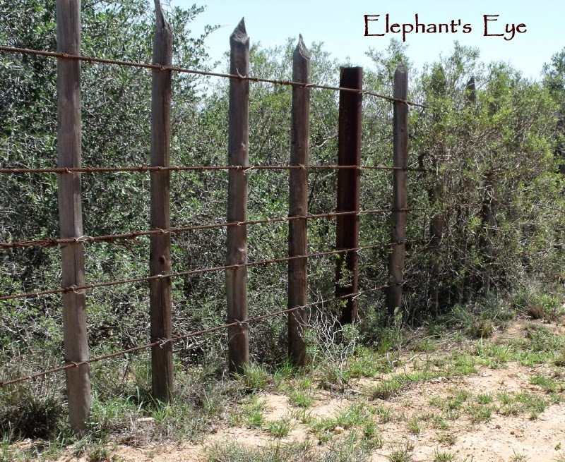 Armstrong fence against Addo's elephants