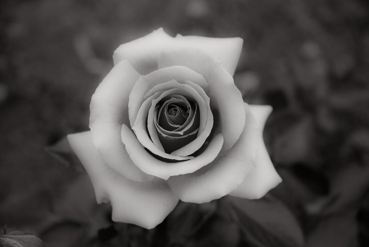 FOTO Digitalhambra: Flores ¿En Blanco Y Negro?