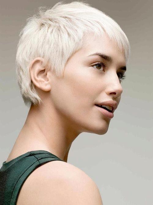 La voluntad de shorthairs blonde 3 8