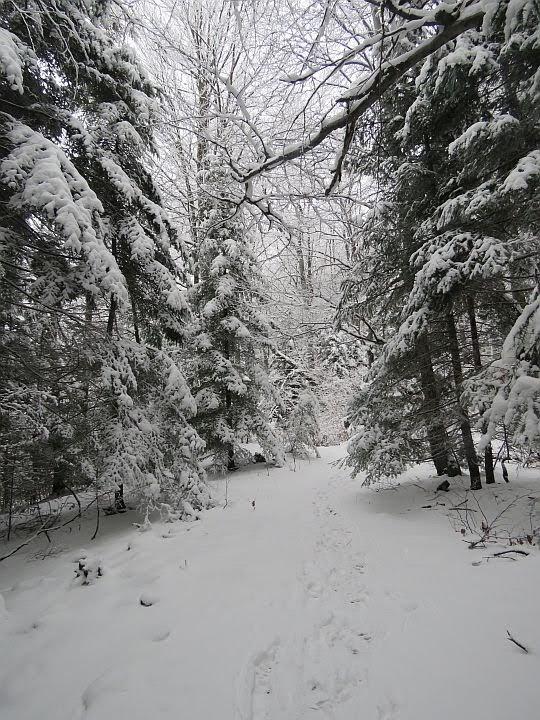 Piękny las i cudowna zima.