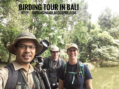 Birding West Bali National Park and anywhere in Bali and Eastern Java