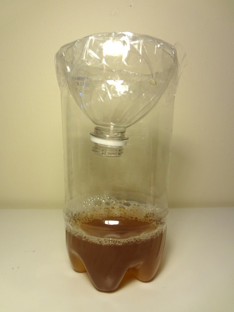 aka Bailey: A Homemade Fruit Fly Trap that Actually Works