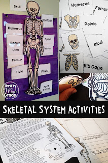 Learn all about the skeletal system with these activities! Students will put together a skeleton, read an article and answer questions, plus will learn bones! You can use the flashcards as an interactive pocket chart, or as a matching game!