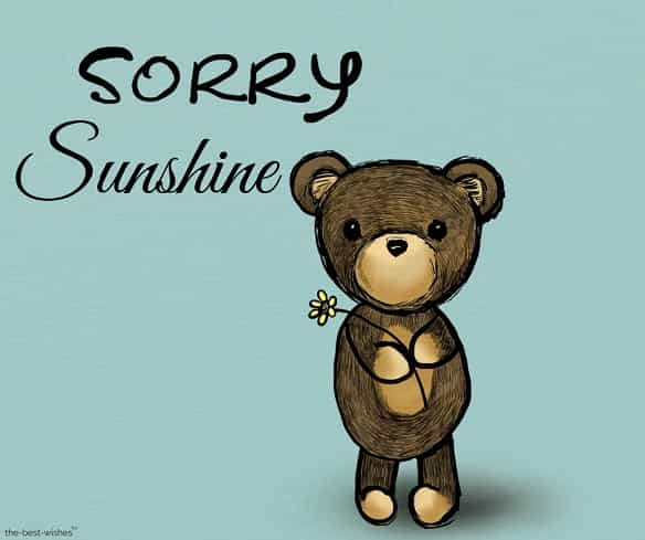 sorry sunshine with cute teddy bear