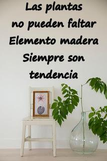 Una planta es la mejor opción para aportar el elemento madera