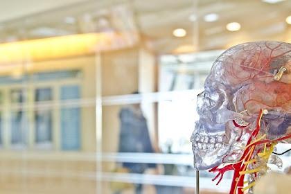 Cara meningkatkan daya ingat otak untuk dewasa