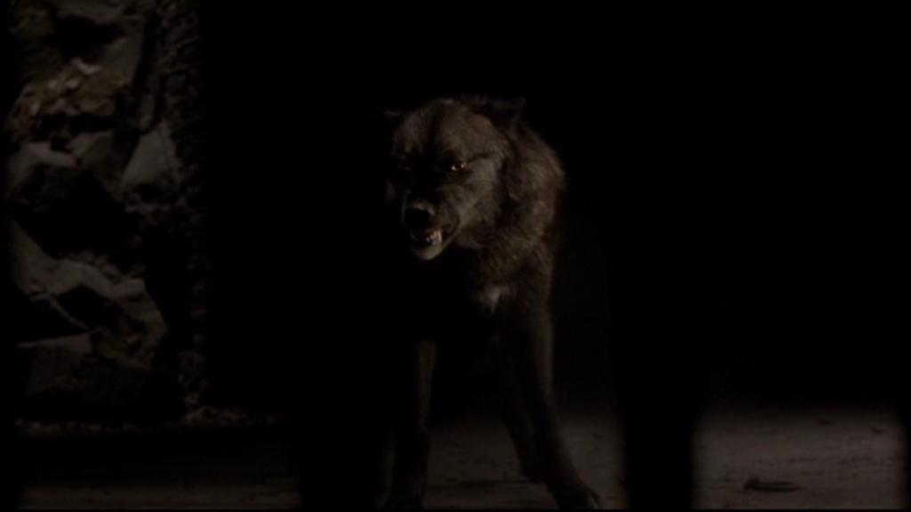 Vampire Werwölfe