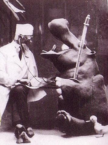 Витрина «Доктор Айболит»