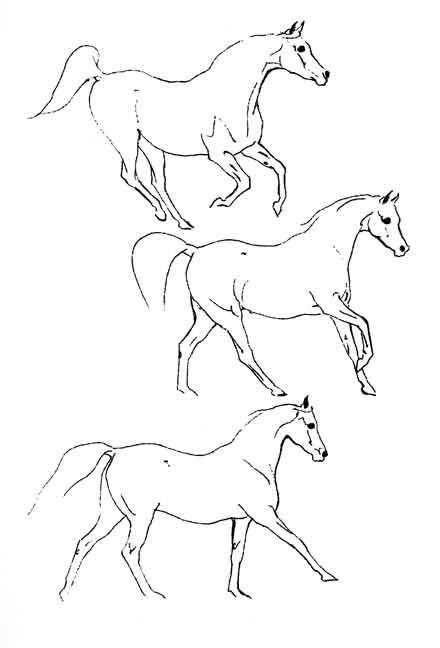 Delighted Horses
