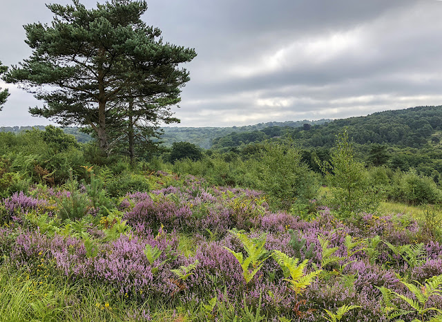 Ashdown Forest looking south from below Church Hill car park, 19 August 2018