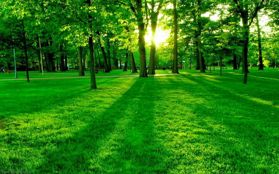 green field, sun shining through trees, a park