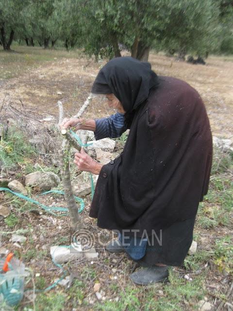 Η 88χρονη Κρητικιά που ακόμα μπολιάζει τα δέντρα της photos