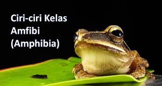 Ciri-ciri Kelas Amphibia (Amfibi)