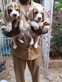 dog breeders in bangalore