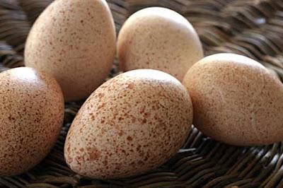 بيض الدجاج الرومي