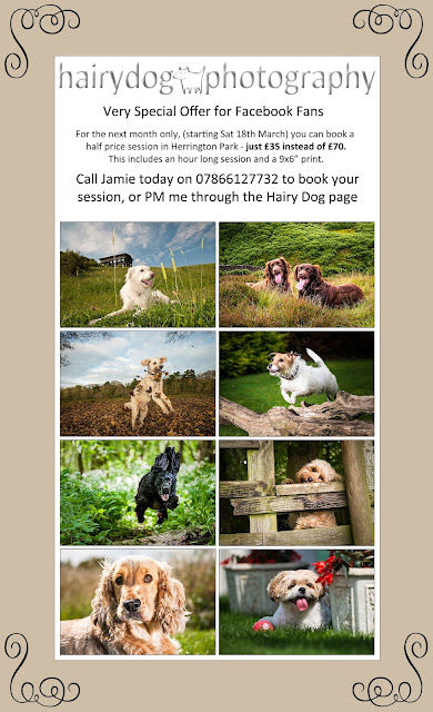 discount photoshoot, north east pet photography discount, half price photoshoot, hairy dog photography