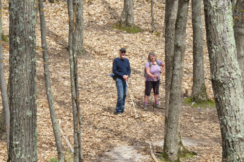 hikers in the woods