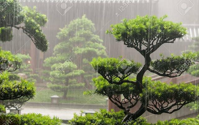 Hanya dengan munculnya kontrol iklim baru Cara Merawat Pohon Bonsai Anda Untuk Menjadi Juara
