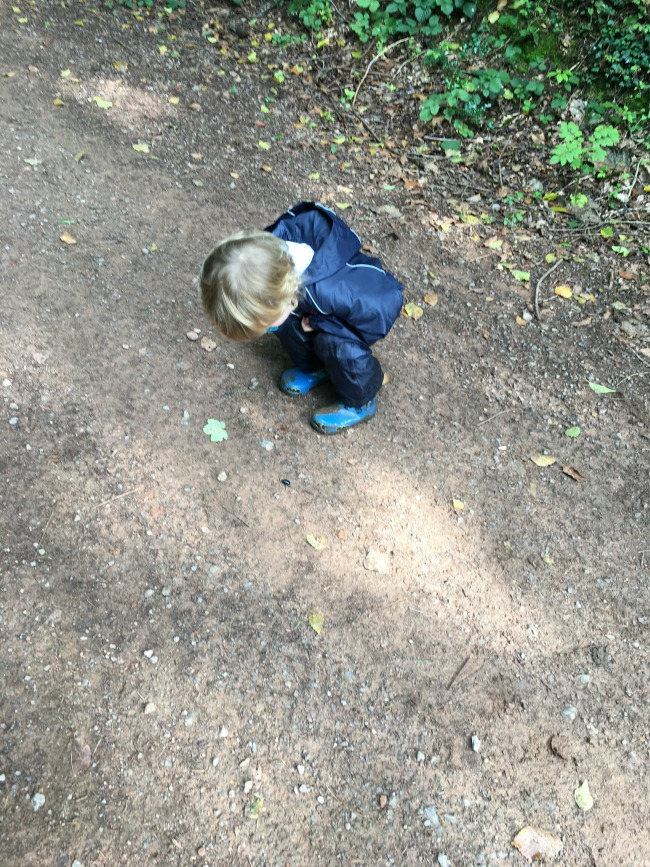 toddler-looking-at-beetle-on-the-ground