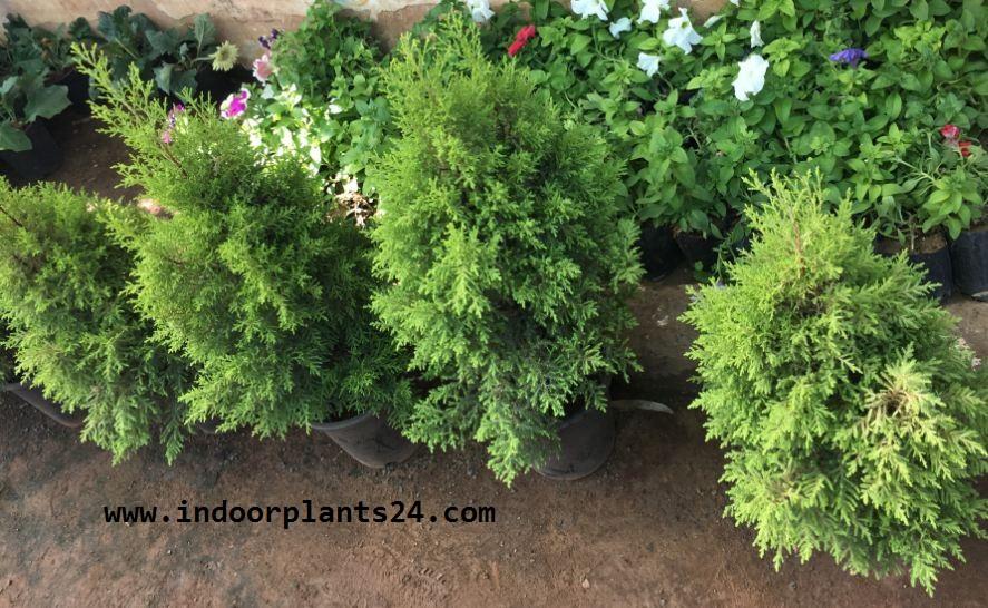 Names Indoor Houseplants on indoor seedlings, indoor ferns, indoor orchids, indoor roses, indoor trees, indoor plants, indoor shrubs, indoor palms, indoor organic gardening, indoor spices,
