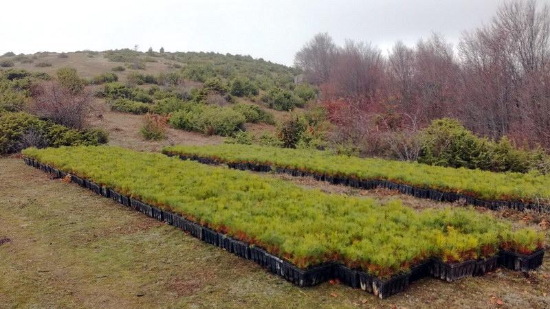 Αναδάσωση από τον TAP στη Βόρεια Ελλάδα, με 400.000 δένδρα και θάμνους
