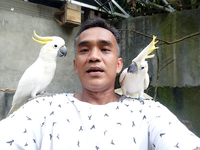 memelihara burung kakatua
