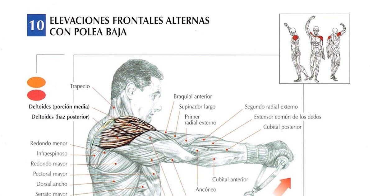 deltoides posterior polea baja