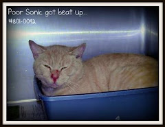 UPDATE  8/17/11 Tabby Cats Kittens in Rural Kill Shelter.  Do Not Have Petfinder Listing.