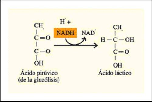 Conceptos De Química ácido Acético Y ácido Láctico Tienen