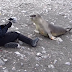 This Woman Sits Down To Photograph A Baby Seal. She Gets A Big Surprise!