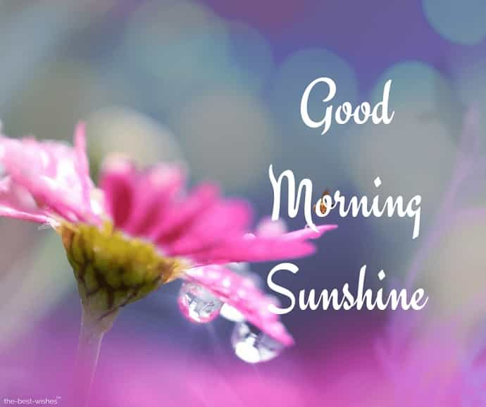 good morning sunshine pic