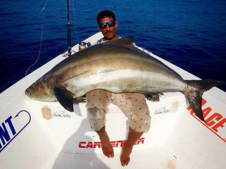 how to fish for cobia