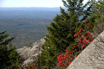M-M Trail on rock face with bright red mountain ash berries