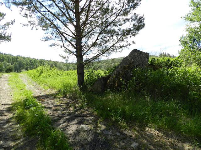 Дорога, сосна, скальный останец