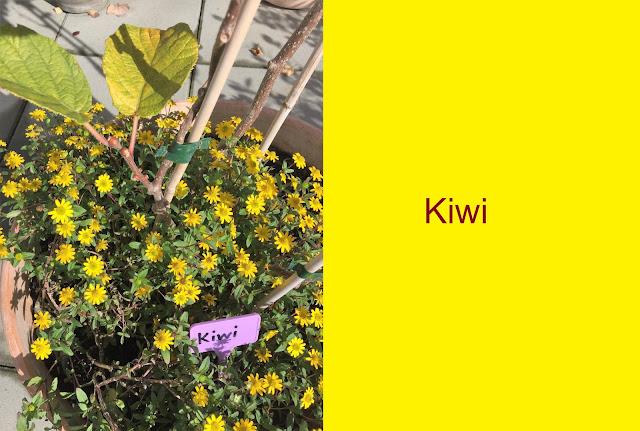 Namensschild Kiwi