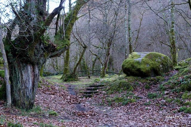Área Recreativa La Pesanca Asturias