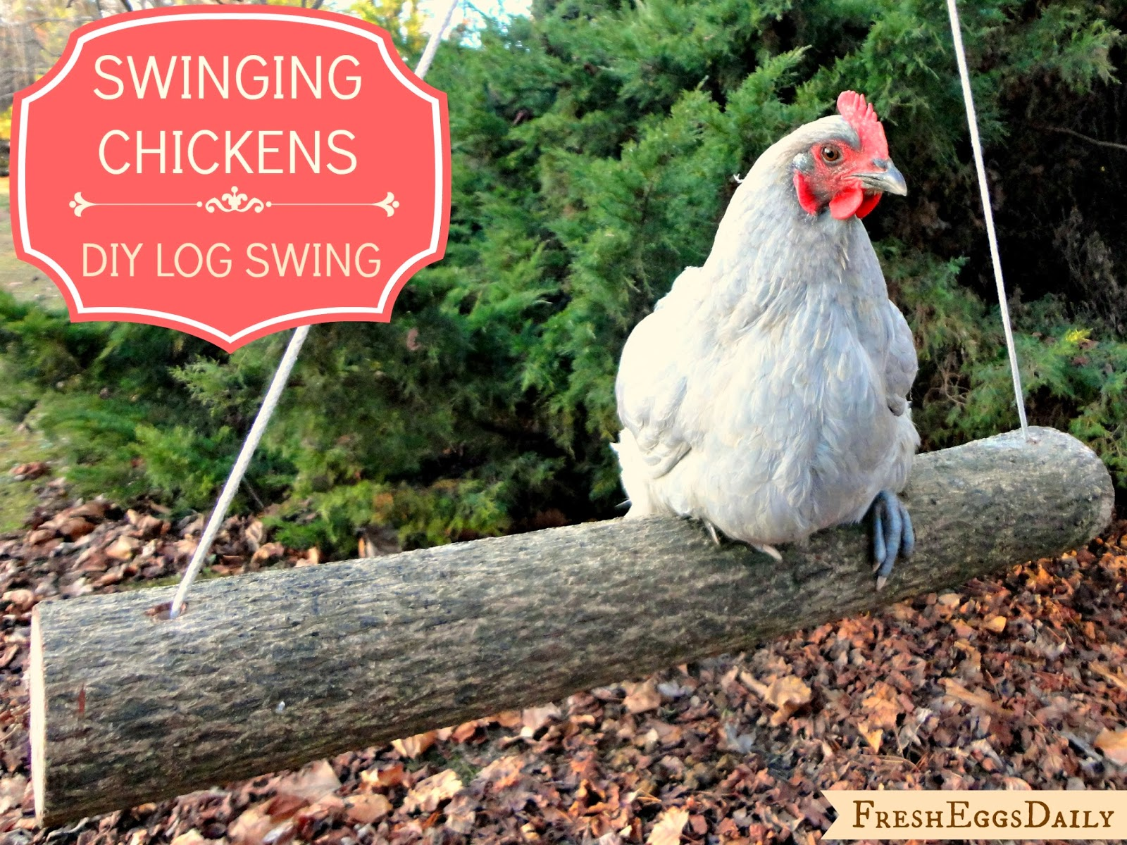 Swinging Chickens Make An Easy Diy Log Swing For Your Run