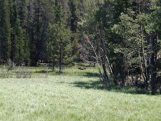 Moose in distant meadow