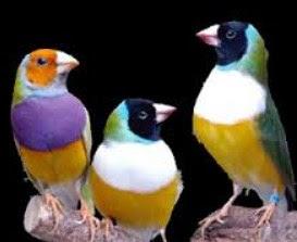 14 Jenis Burung Hias Yang Trend Untuk Di Pelihara