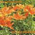 фото открытка на день варение цветы
