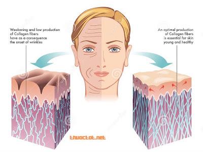 Collagen liên quan chặt chẽ tới sức khỏe làn da. Collagen chịu tác động bởi một số yếu tố