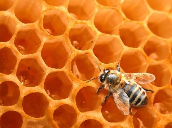 origine les alv oles des abeilles. Black Bedroom Furniture Sets. Home Design Ideas