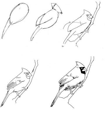 cara menggambar burung kardinal